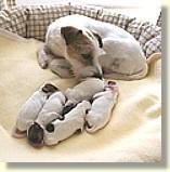 ready_puppy_s